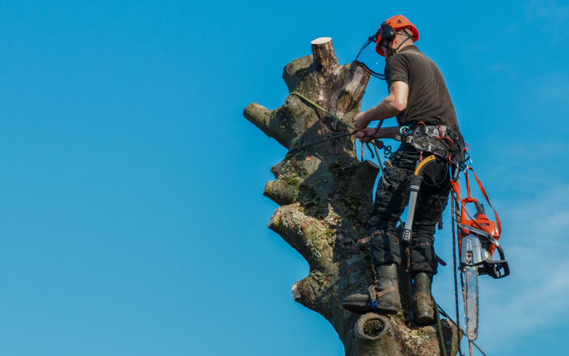 Tree Surgery in Maidstone & Kent - Commercial Tree Services - G.Shrubb