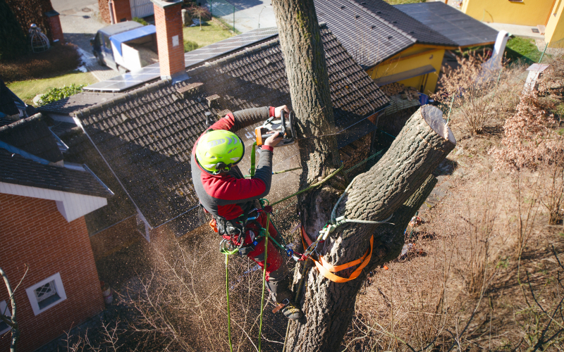 Tree Surgery in Maidstone & Kent - Residential Tree Services - G.Shrubb