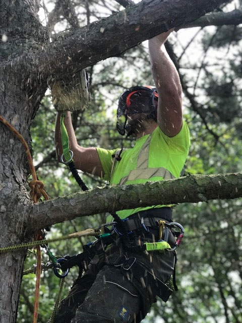 Tree Surgeon - Contact G.Shrubb Tree Surgery Ltd in Maidstone & Kent