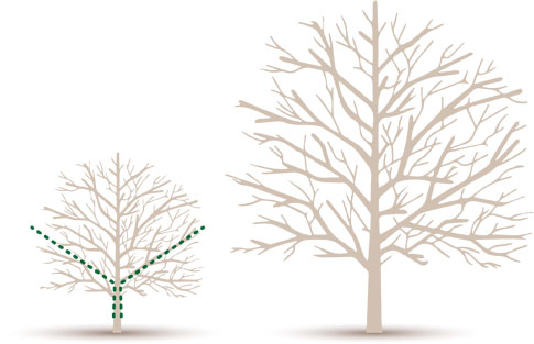 Formative Pruning - Residential Services